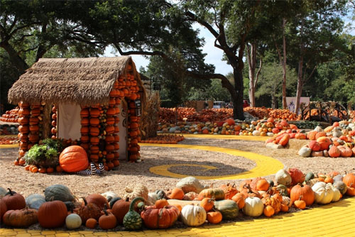 Pumpkins Curcurbits Village Autumn Festival Dallas Arboretum 2017 Oz Theme