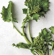 Broccoli Rabe is quite Bitter but compliments other rich foods!