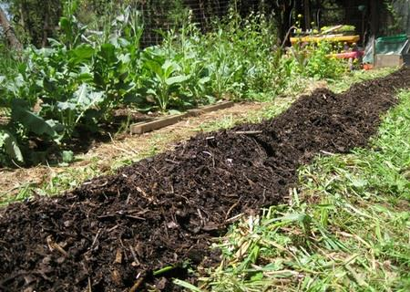 Amendment BioChar and Compost + Manure Yields Great Results!