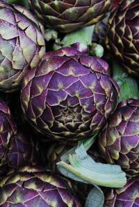 Artichoke Purple Variety of Big Heart Lompoc CA Steve Jordan