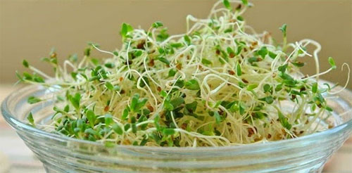 Climate Crisis Many Sprouts are surprisingly High in Protein!