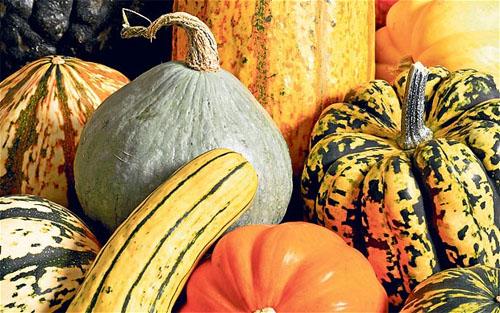 Winter Squash Gourd Pumpkin!