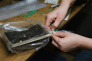 Seed Cold Stratification in Sand, Peat, Worm Castings