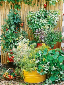 Container Gardening gone Rampant!