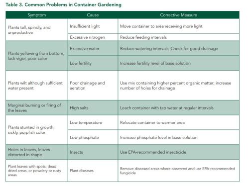 Common Problems of Container Gardening Help List