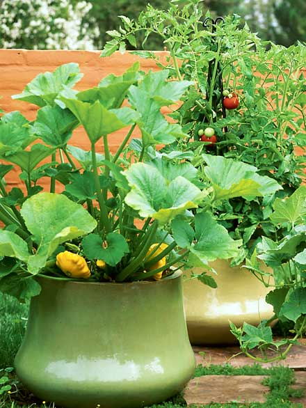 The Beauty & Pleasures of Container Gardening! Pattypan Squash!