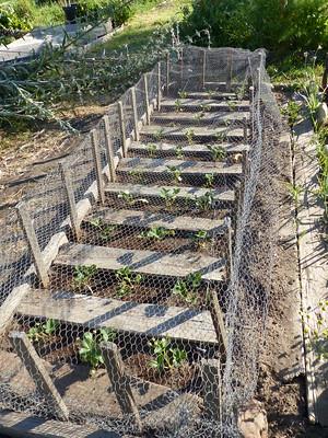 Strawberries Board Mulch
