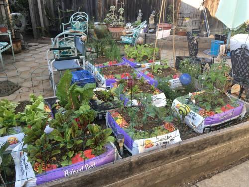 Container Laura Gasparrini creative bag garden quick easy