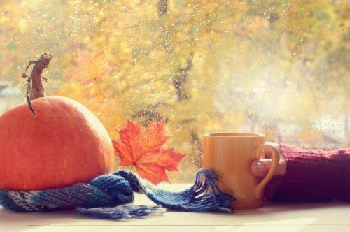 October 2021 Very Last of Summer Harvests, SeedSaving, Fall Transplants!